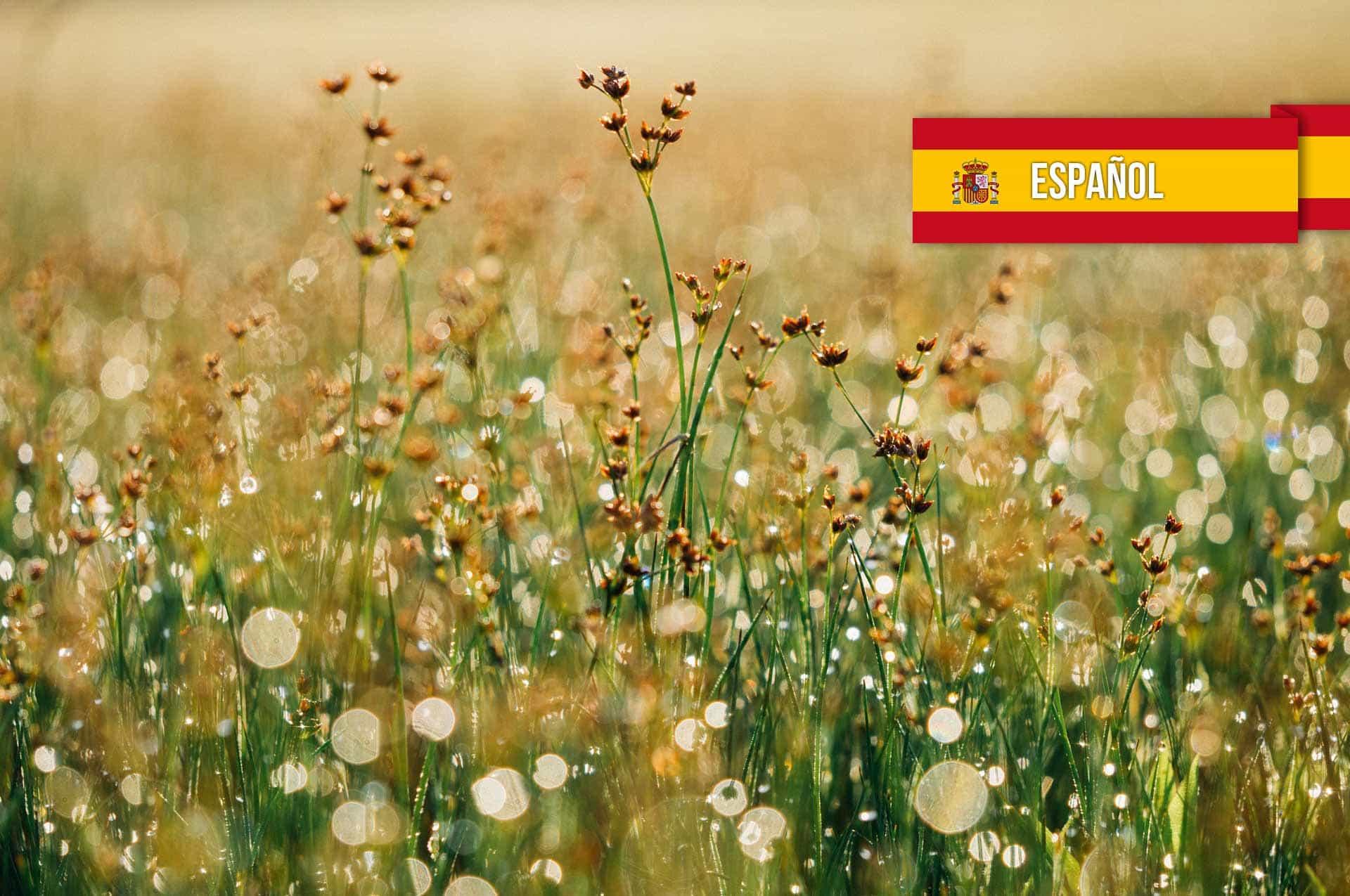 La luz del evangelio es la Gloria de Dios – Spanish translation